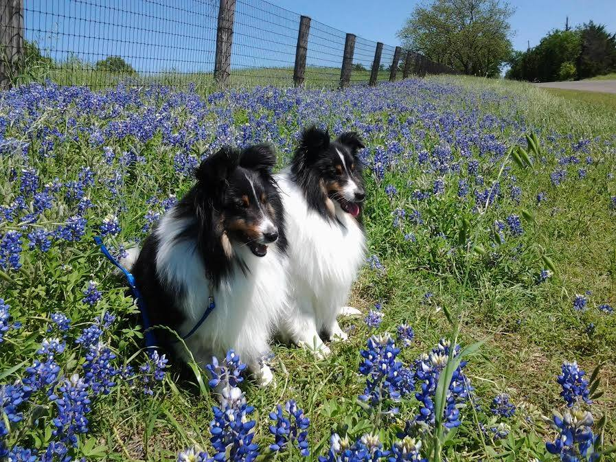 Two dogs in a field of flowers - Expio Consulting